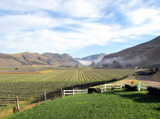 Bien Nacido Vineyard Photo: Richard Jennings